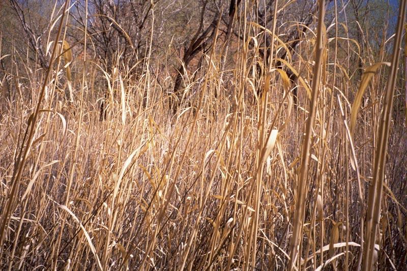 Escalante River Hike 2001